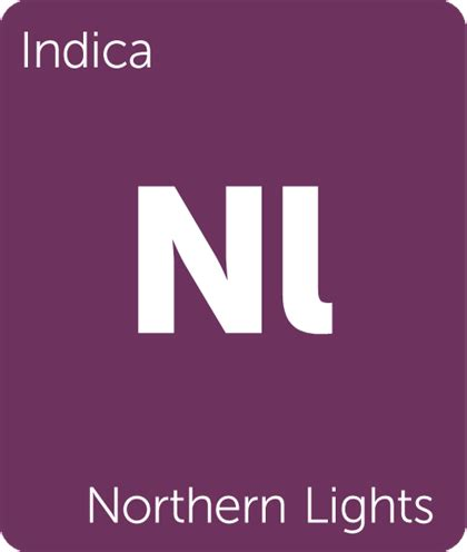 Northern lights review bookstore